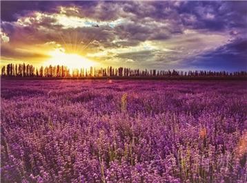 新疆伊犁+赛里木湖+巴音布鲁克草原+那拉提旅游风景区5日4晚私家团