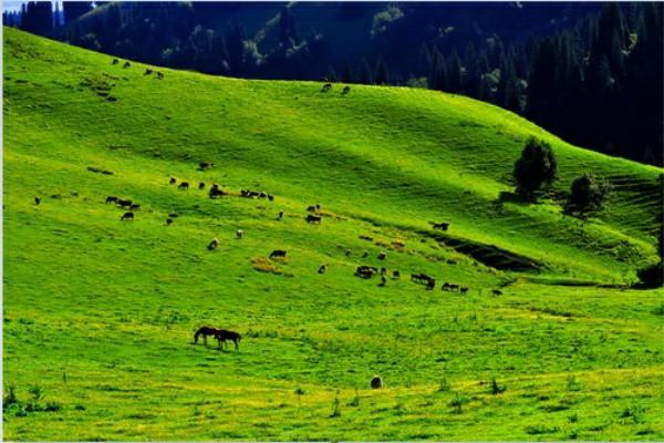 大美新疆旅游景点欢迎您!